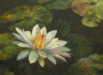 waterlily-1 16