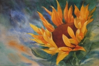 sunflower-2